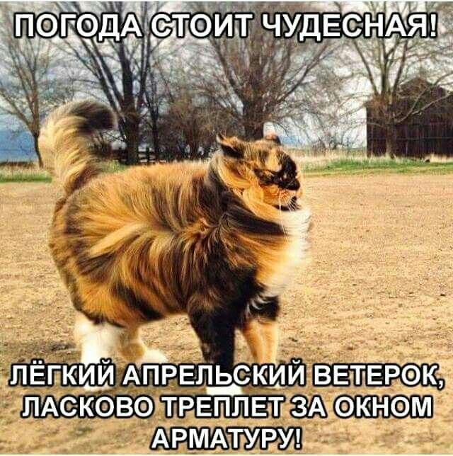 http://s6.uploads.ru/0MAam.jpg