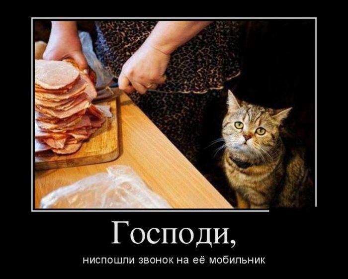 http://s6.uploads.ru/1F2ZN.jpg