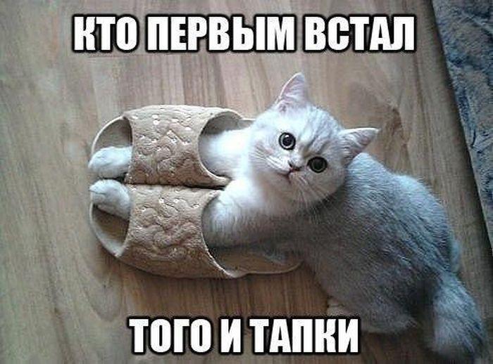http://s6.uploads.ru/1on0M.jpg
