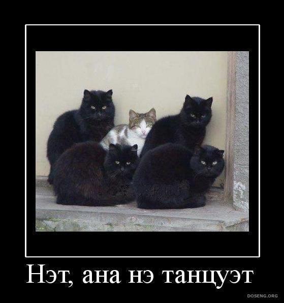 http://s6.uploads.ru/6o1Ep.jpg