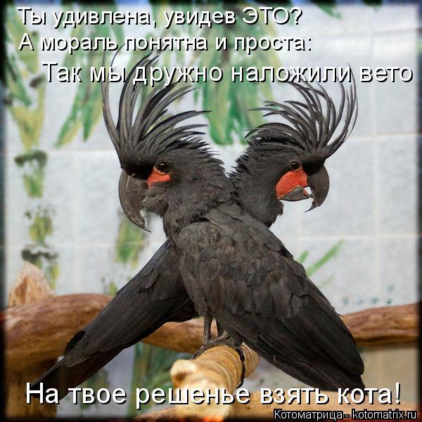 http://s6.uploads.ru/9GVMb.jpg