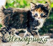 http://s6.uploads.ru/DSM1g.jpg
