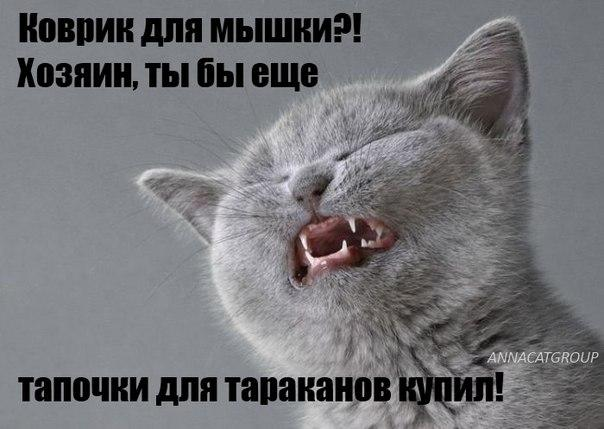 http://s6.uploads.ru/K4kit.jpg