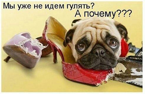http://s6.uploads.ru/KSF7a.jpg
