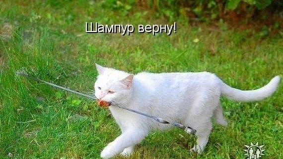 http://s6.uploads.ru/R3cLS.jpg