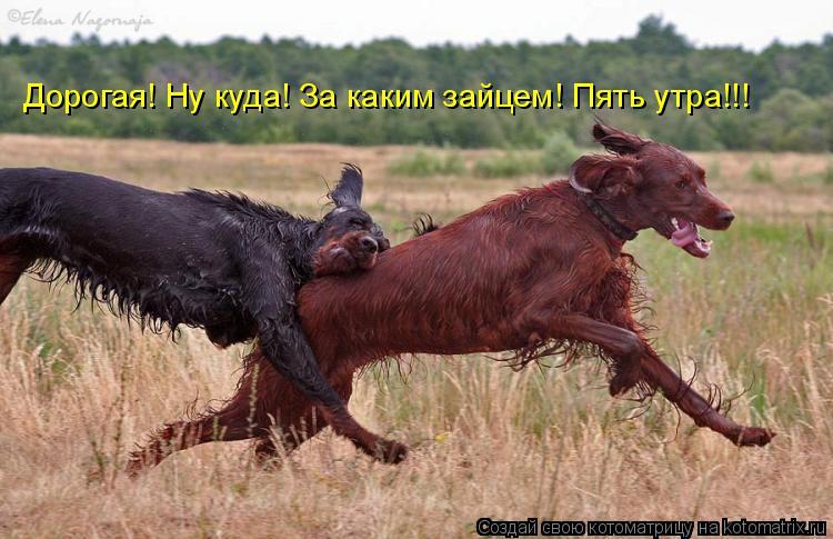 http://s6.uploads.ru/SF7el.jpg