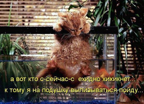 http://s6.uploads.ru/SQZN0.jpg