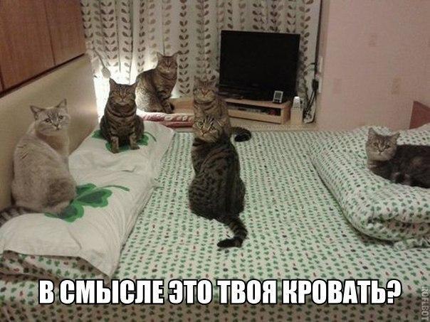http://s6.uploads.ru/Srnd6.jpg