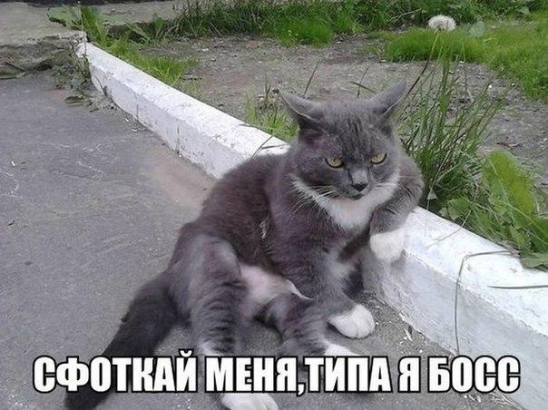 http://s6.uploads.ru/TXe1U.jpg