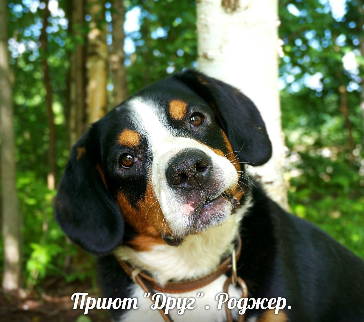 http://s6.uploads.ru/WxZbm.jpg