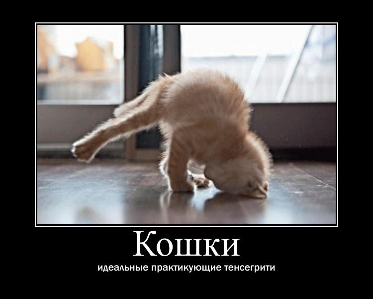 http://s6.uploads.ru/YhHU8.jpg