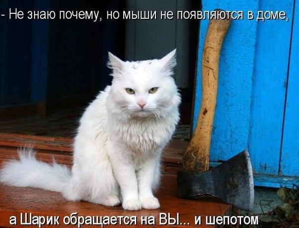 http://s6.uploads.ru/Ykd6y.jpg
