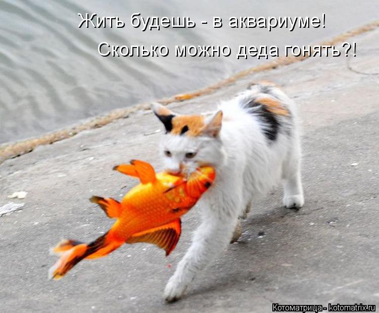 http://s6.uploads.ru/ay1Jj.jpg