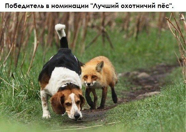 http://s6.uploads.ru/czB4O.jpg