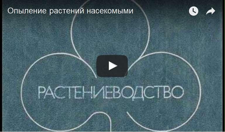 http://s6.uploads.ru/d/nZKsS.jpg