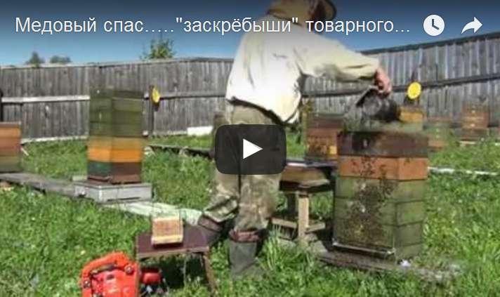 http://s6.uploads.ru/d/vetis.jpg