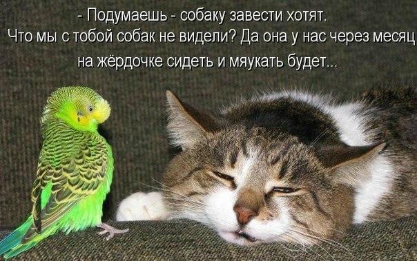 http://s6.uploads.ru/dN9lM.jpg