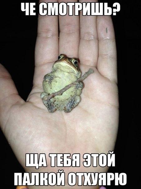 http://s6.uploads.ru/dYqUG.jpg