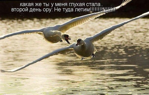 http://s6.uploads.ru/f2woz.jpg