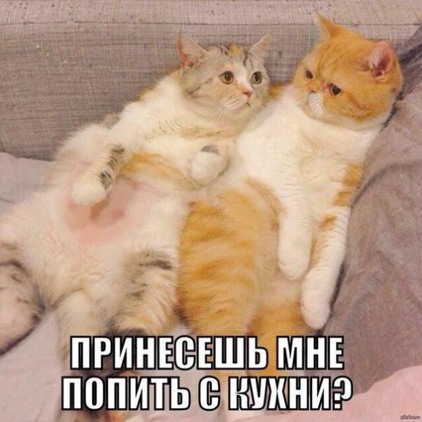 http://s6.uploads.ru/fChgn.jpg