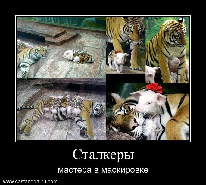 http://s6.uploads.ru/h8VUd.jpg