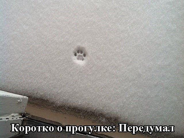 http://s6.uploads.ru/isP8K.jpg