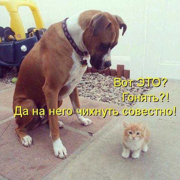 http://s6.uploads.ru/nsvBD.jpg