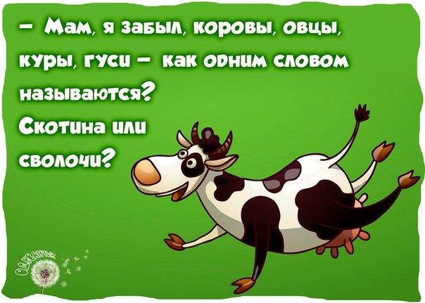 http://s6.uploads.ru/o16n3.jpg