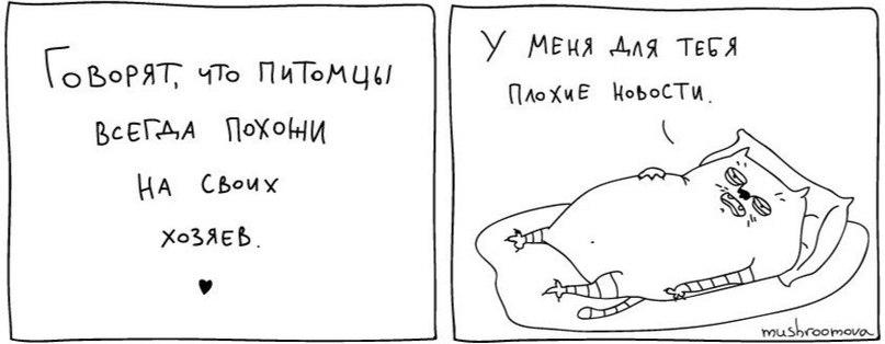 http://s6.uploads.ru/r16ty.jpg