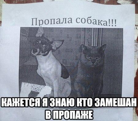 http://s6.uploads.ru/svdWY.jpg