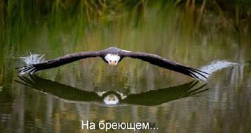 http://s6.uploads.ru/t/00BrU.jpg