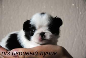 http://s6.uploads.ru/t/0APV8.jpg