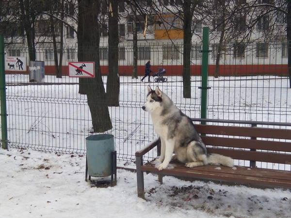 http://s6.uploads.ru/t/0FklE.jpg
