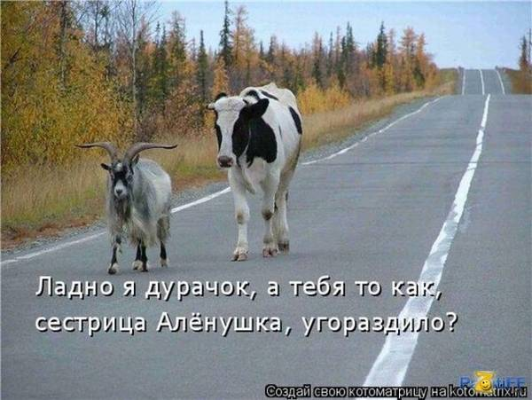 http://s6.uploads.ru/t/1ZJdh.jpg