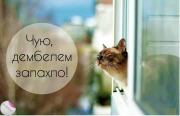 http://s6.uploads.ru/t/1kB96.jpg