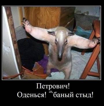 http://s6.uploads.ru/t/2381Y.jpg