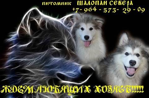 http://s6.uploads.ru/t/2lAHd.jpg