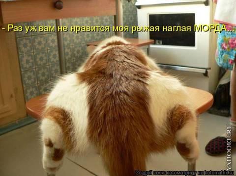 http://s6.uploads.ru/t/3R17b.jpg