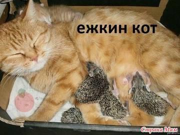 http://s6.uploads.ru/t/3XFyG.jpg