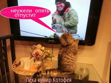http://s6.uploads.ru/t/4f5oe.jpg