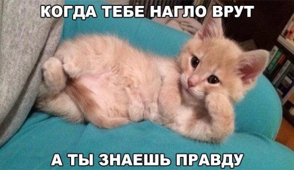 http://s6.uploads.ru/t/71vsn.jpg