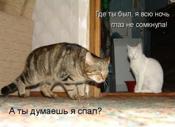 http://s6.uploads.ru/t/7KcHh.jpg