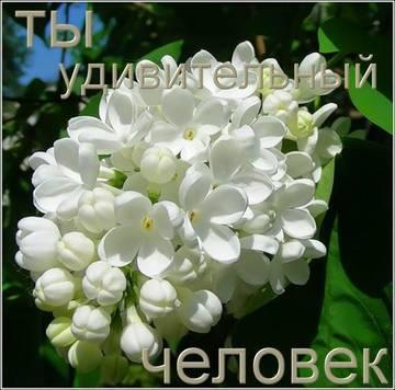 http://s6.uploads.ru/t/7MBUb.jpg