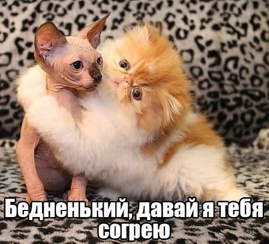 http://s6.uploads.ru/t/7VOhl.jpg