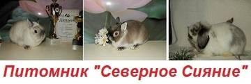 http://s6.uploads.ru/t/7eQKZ.jpg