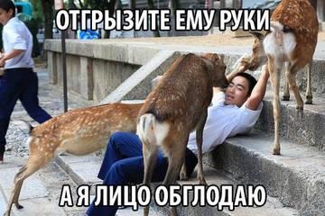 http://s6.uploads.ru/t/7ncsg.jpg