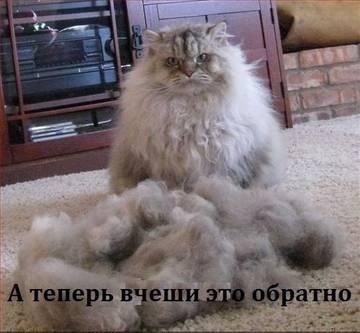 http://s6.uploads.ru/t/921kn.jpg