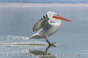 http://s6.uploads.ru/t/9ukJD.jpg
