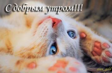 http://s6.uploads.ru/t/AFy8q.jpg