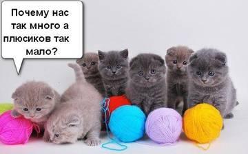 http://s6.uploads.ru/t/BjJ7H.jpg